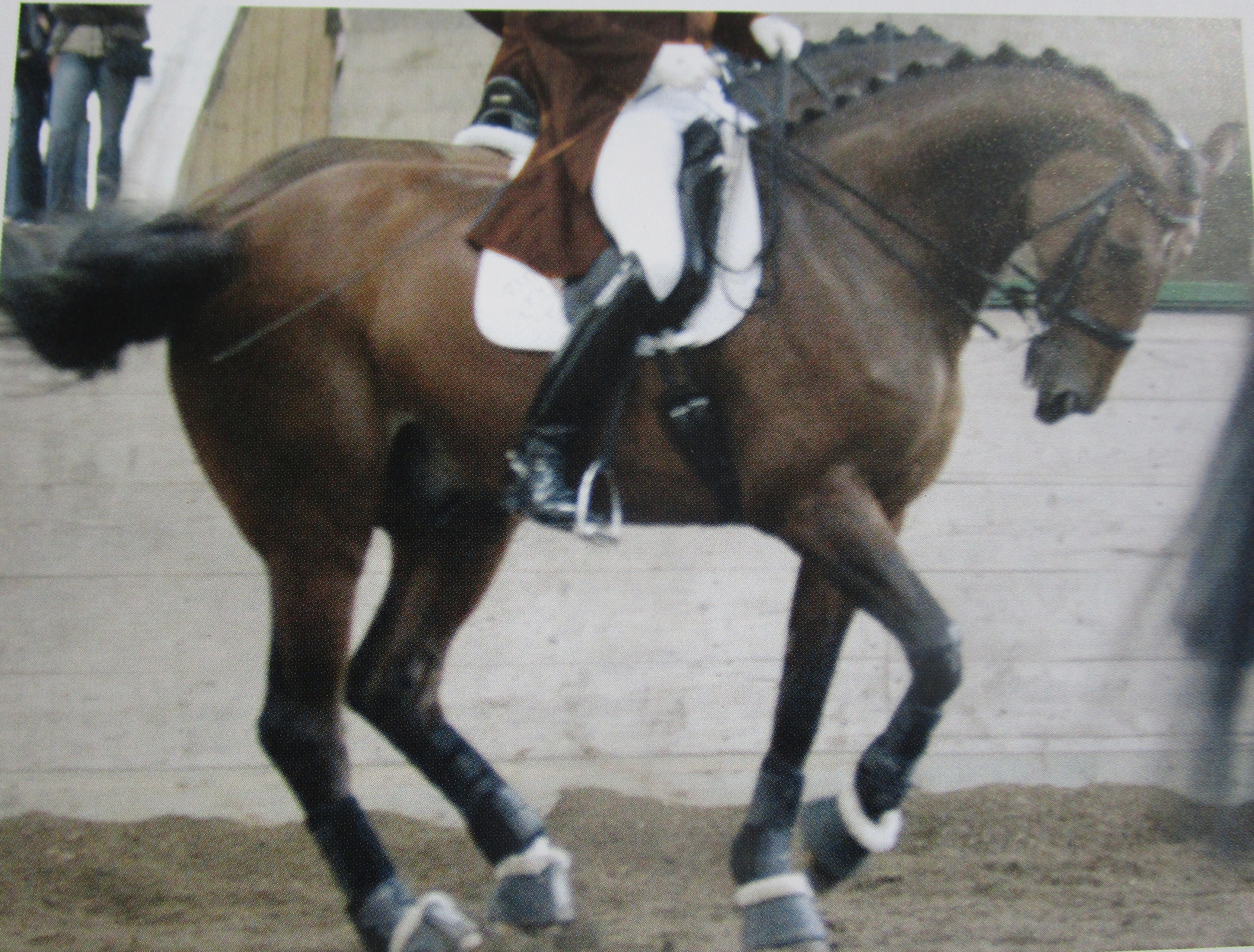 A faulty piaffe with the horse behind the vertical